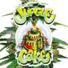 jungle cake seeds
